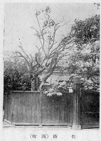 麻布区史に掲載された「七色椿」