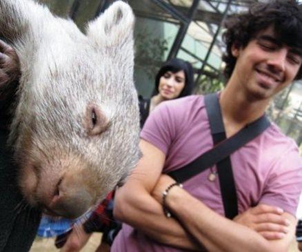 Joe Jonas en Australia