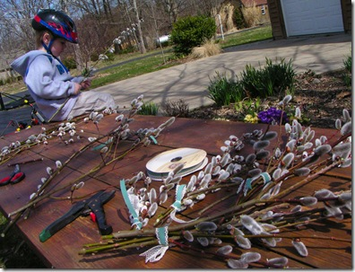 Pussy Willow Boquets