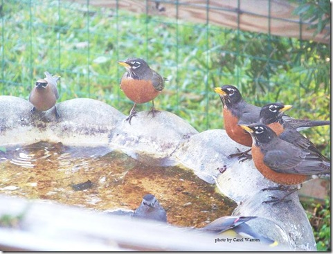 3.4.09 birds 005c