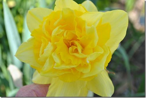 Spring Flowers 006
