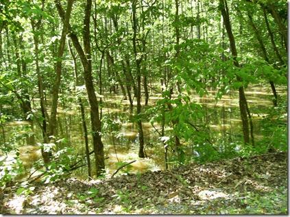 Lake Barkley bottom land