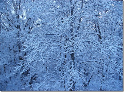 Snow on Trees Simple Cookery
