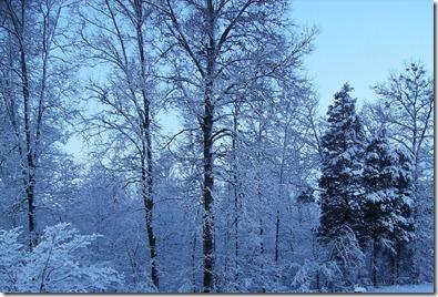 Snow on Cedars Simple Cookery