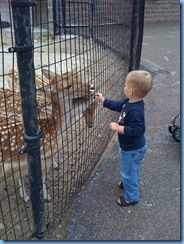 ryan zoo