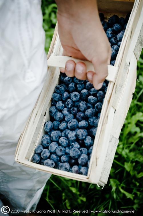Blueberry2010_0015-1-2