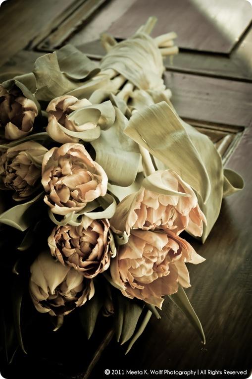 Tulips042011_0002-WM