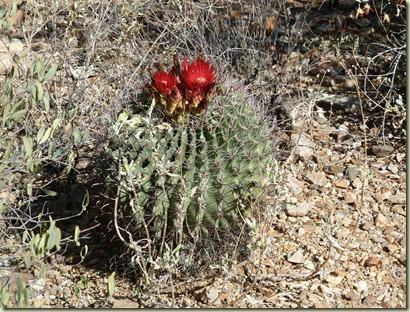 2010 09 23_Tucson_2519