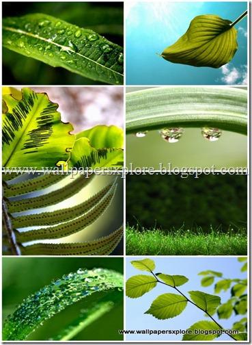 30 plants wallpapers 1600 X 1200 (www.wallpapersxplore.blogspot