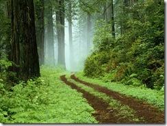 Uma trilha de floresta no parque Redwoods State, Califórnia.