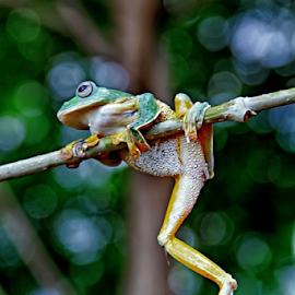 by Nyimas  Nurul - Animals Amphibians