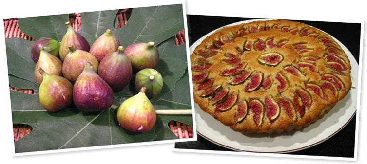 View fig frangipane tart