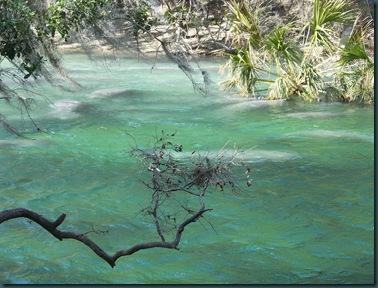 1.19.09 Blue Springs, Hoontoon Island 039