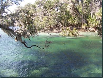 1.19.09 Blue Springs, Hoontoon Island 042