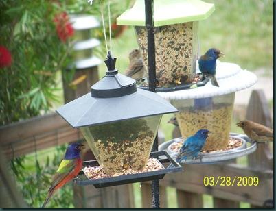 birds 3.27.09 020