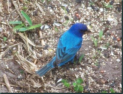 4.6.09 blue & paint 008c