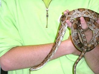 Melbicks-змея