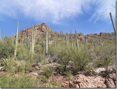 td_saguaro