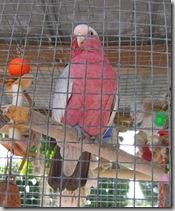 bird 640 x 480