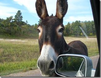 csp burro car
