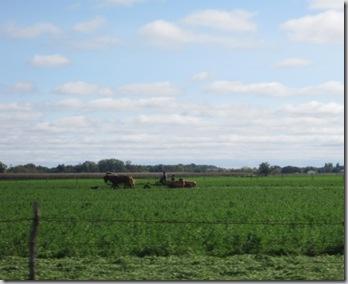 cu amish farmer