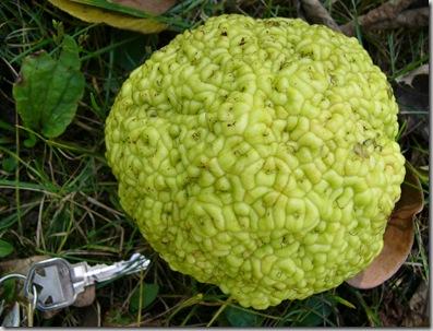 cu green brain