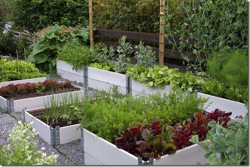 Wenches grønnsakshage 2008