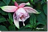 Pink-Galore