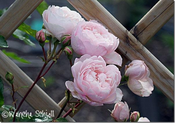 The-Generous-Gardener-(6)
