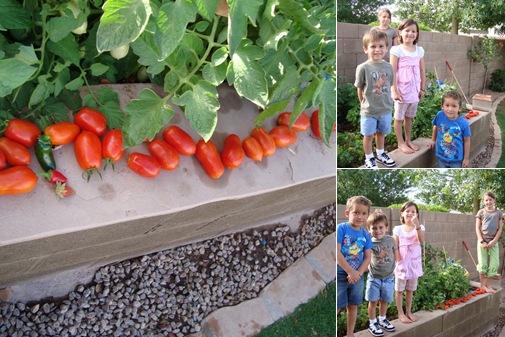 View tomato's