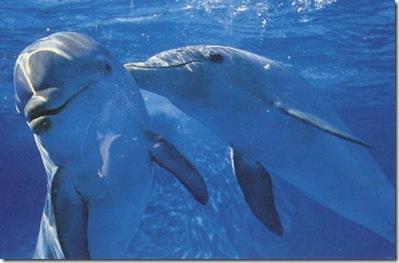 dolphincsal