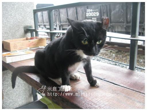 20100621-cats-25.jpg