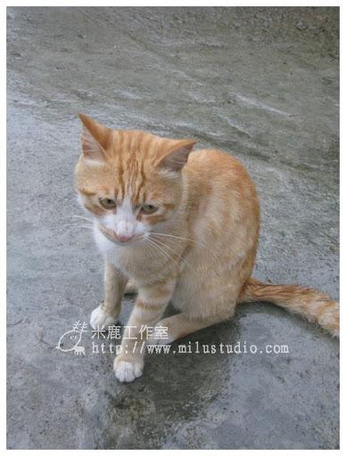 20100621-cats-34.jpg