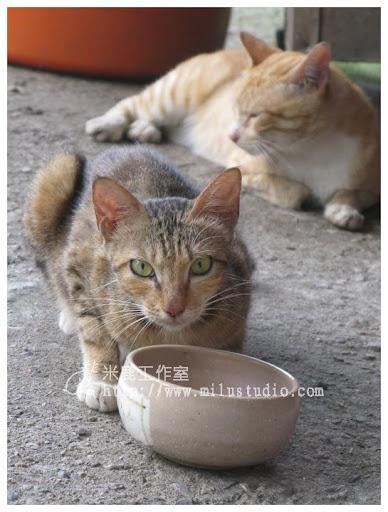2010-cat01-06.jpg