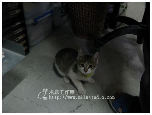 2010cat2201.jpg