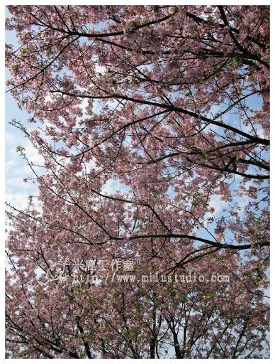 20110314flower44.jpg