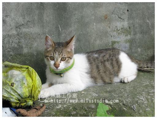 201103cat08.jpg