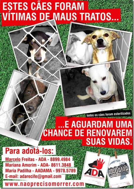Cartaz: Cães para adoção