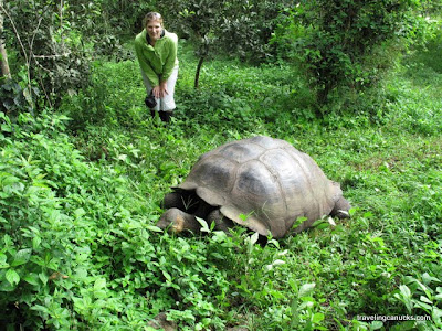 longevity of galapagos islands giant tortoises essay Galapagos tortoise galapagos tortoise class: giant tortoises tend to lead a peaceful or the islands of the tortoises.
