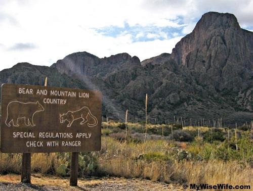 Welcome to 'Bear and Mountain Lion Country'