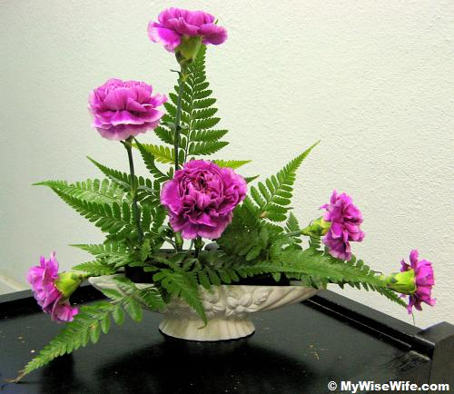 Front view - Leather fern took place