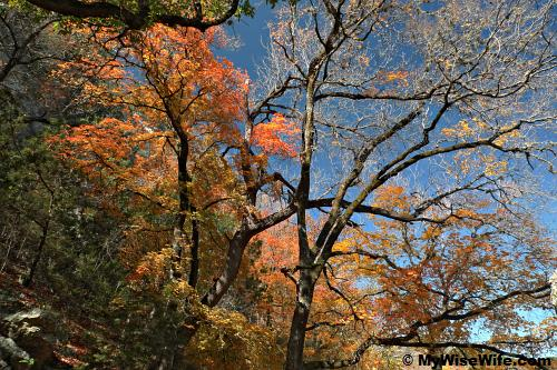 Colorful foliage against blue sky...