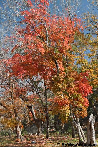 A beautiful potrait of fall
