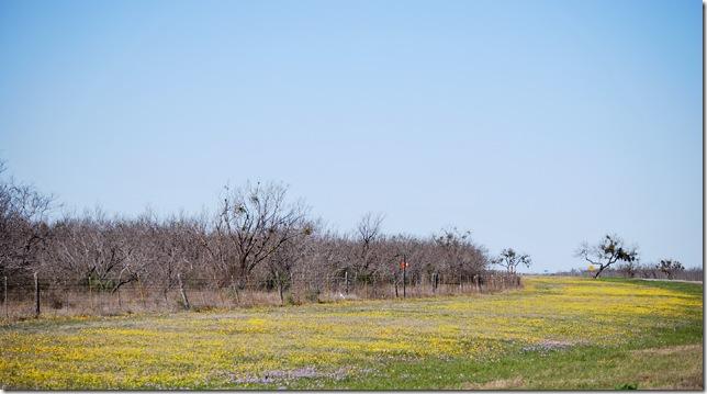 yellow field resized