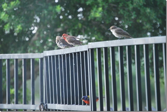 birds on fence