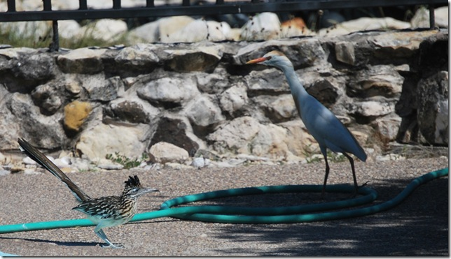 Egret and Roadrunner resized