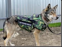 dog - собака