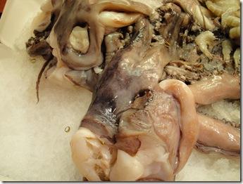 1. octopus