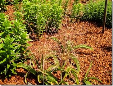 16.  Spikey plants
