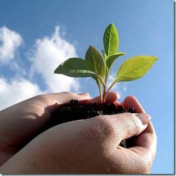 Veg seedling